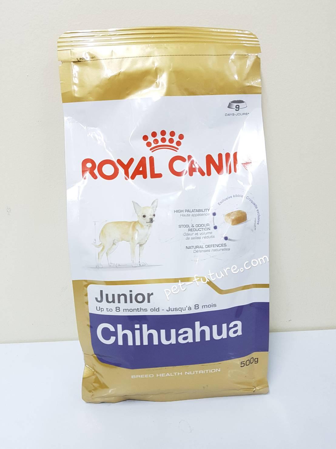 BHN Chihuahua junior 1.5 kg. ลูกสุนัขสายพันธ์ชิวาวา