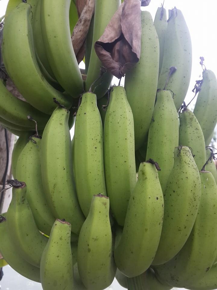 กล้วยหอมไต้หวัน