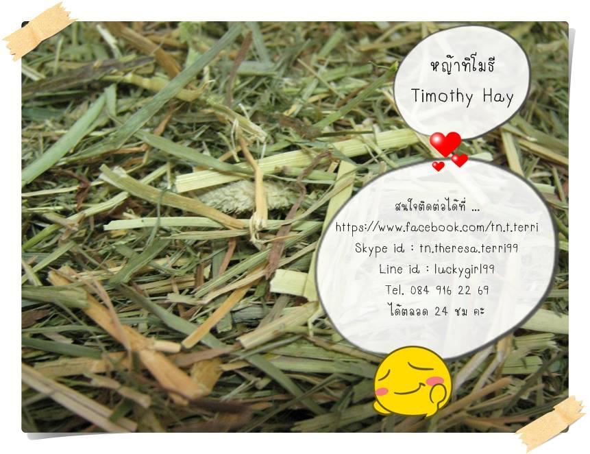 หญ้าทิโมธี (Timothy Hay)