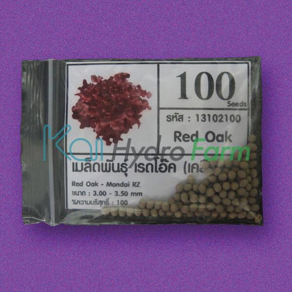 เมล็ดพันธุ์ Red Oak (เคลือบ) 100 เมล็ด