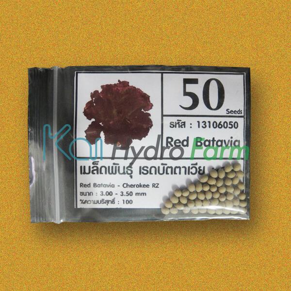 เมล็ดพันธุ์ Red Batavia (เคลือบ) 50 เมล็ด