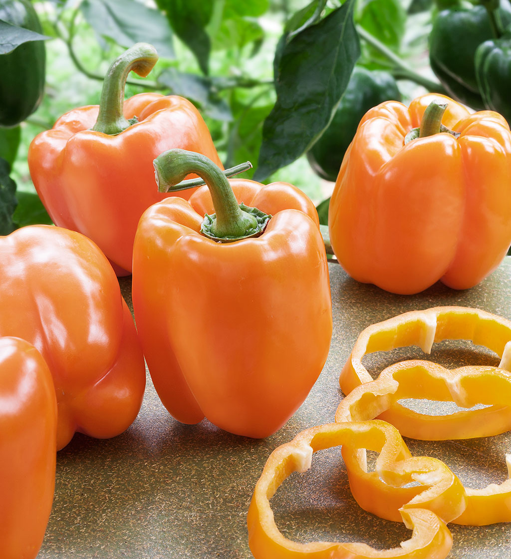 Orange Sweet Pepper