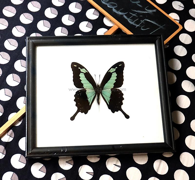 ++ ผีเสื้อสต๊าฟ กรอบผีเสื้อหางติ่ง สีเขียวแอ๊ปเปิ้ล Apple-Green Swallowtail ++