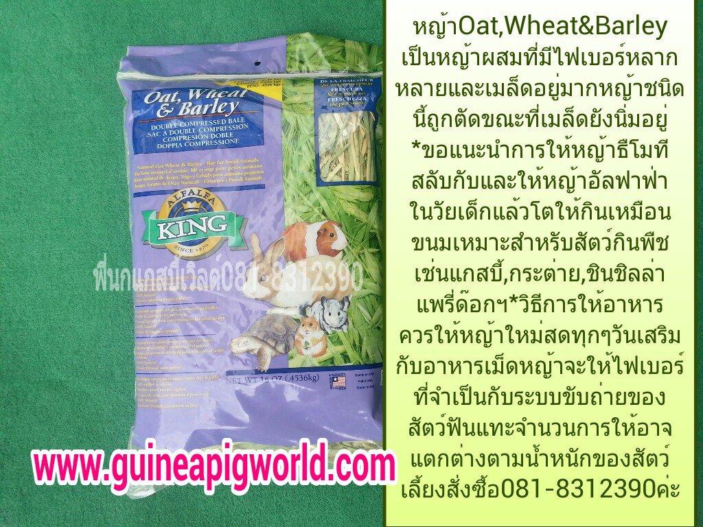 หญ้า Oat, Wheat Grass, Barley