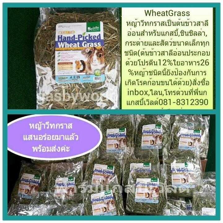 หญ้า Wheat Grass