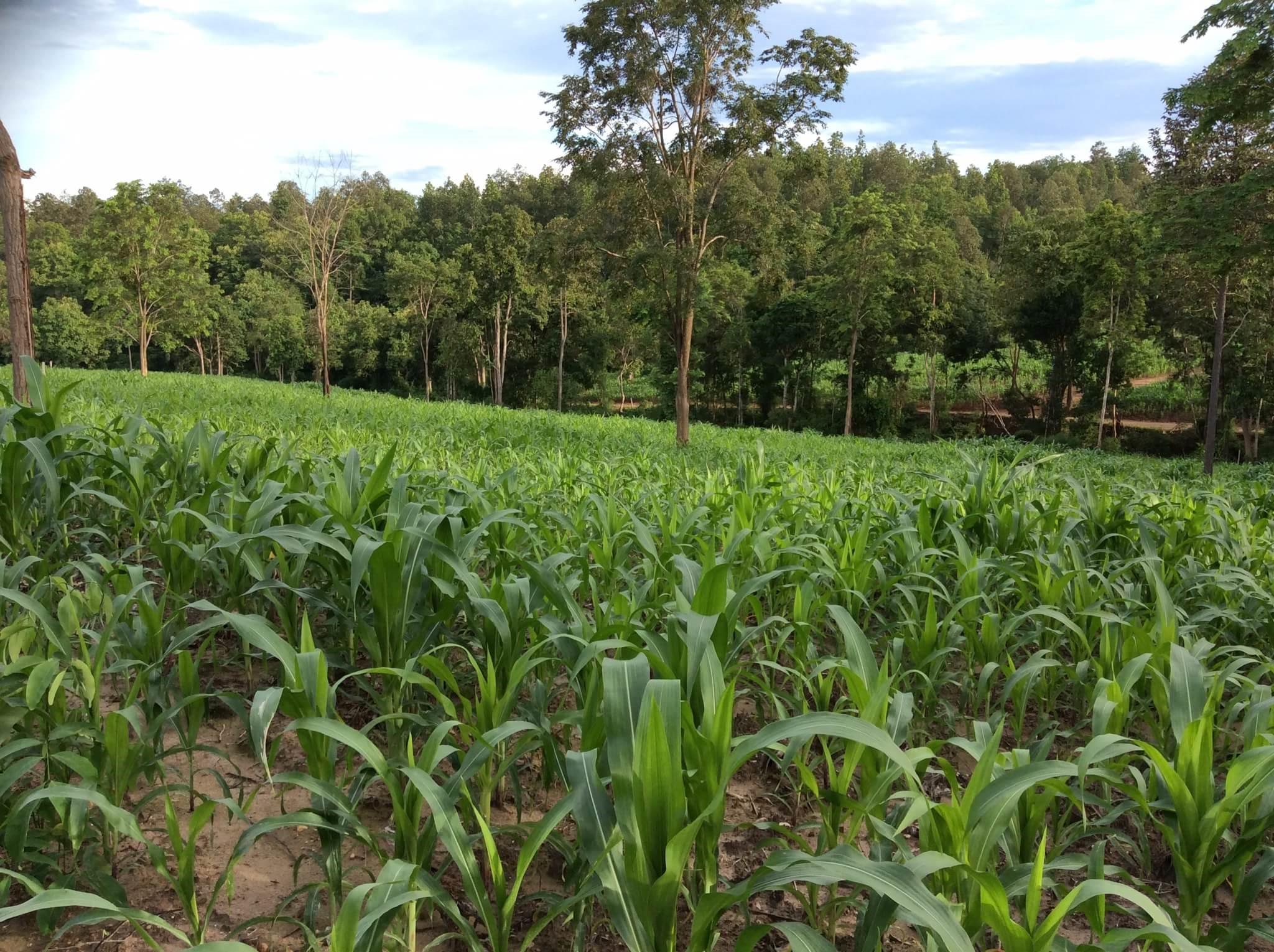 ที่ดิน 100 ไร่ เนินวิวสวย เชียงใหม่ &#x2605 100 rai of land overlooking the beautiful Chiang Mai &#x2605