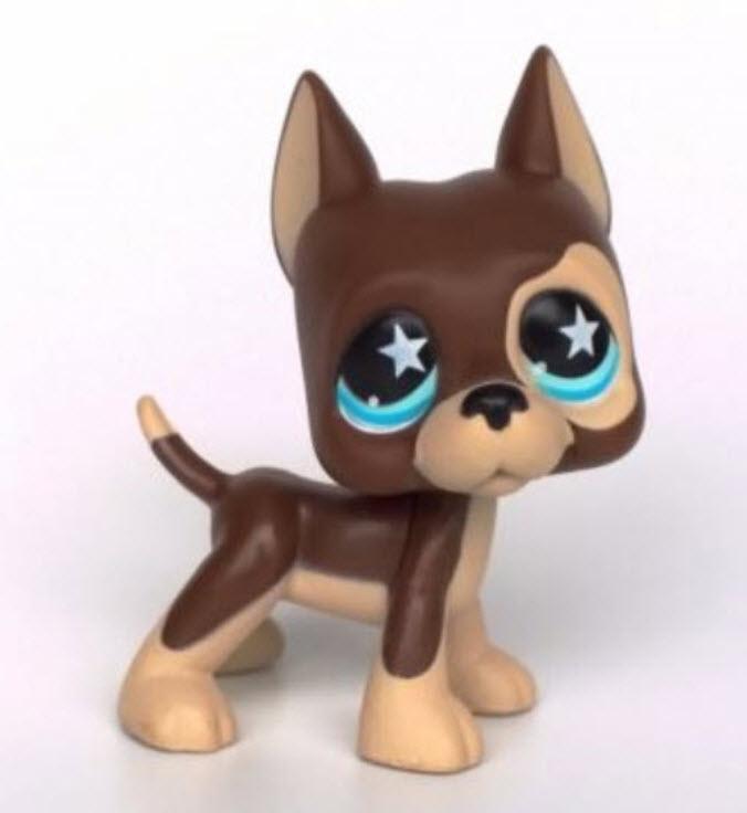 สุนัขเกรทเดน สีน้ำตาลตาสีฟ้า #817 ตัวพิเศษ