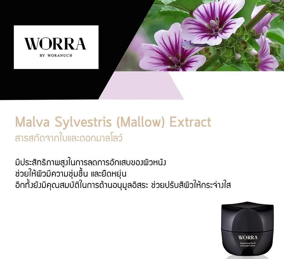 Malva Sylvestris (Mallow) Extract สารสกัดจากส่วนของใบและดอกมาลโลว์ มีประสิทธิภาพสูงมากในการยับยั้งการอักเสบของผิวหนัง อีกทั้งยังช่วยให้ผิวหน้ามีความชุ่มชื้น และยืดหยุ่น อีกทั้งยังมีคุณสมบัติในการกำจัดอนุมูลอิสระ ช่วยปรับสีผิวหน้าให้กระจ่างใส
