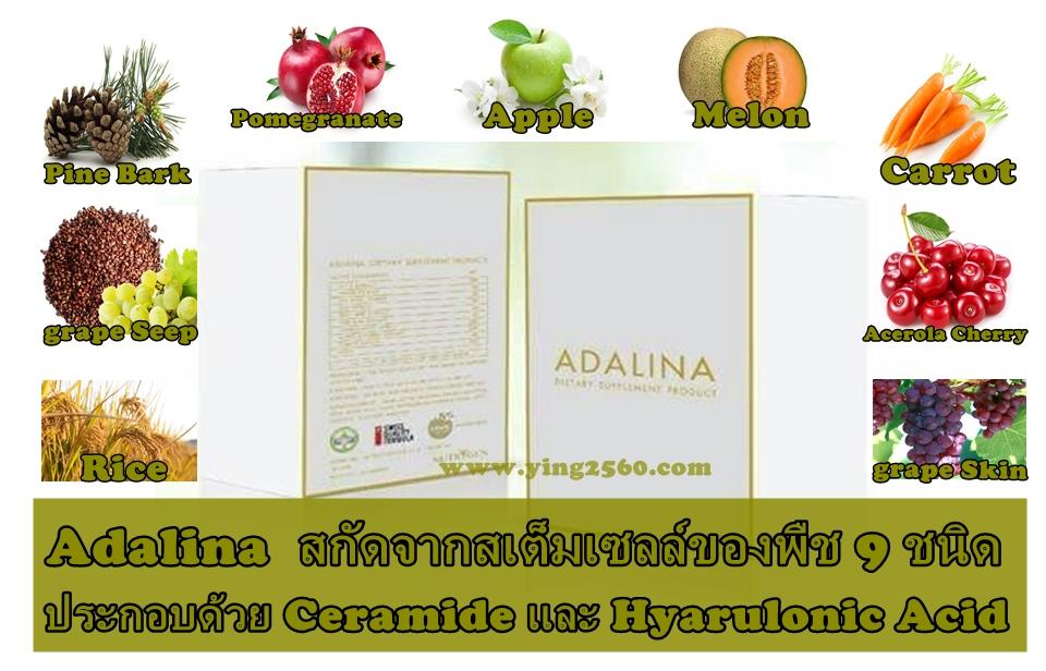 Adalina (อดาลีน่า)